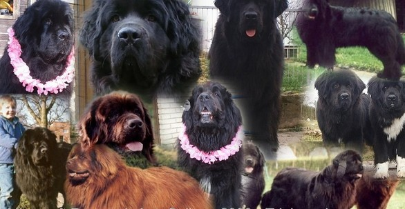 Jonny,Sam,Benson,Gianna,Bedana,Lucy,Deedee,Joy,Eliza